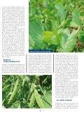 LE OFFERTE - Cooperativa Agricola di Legnaia - Page 5
