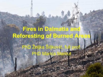Fires in Dalmatia and Reforesting of Burned Areas - Fisa