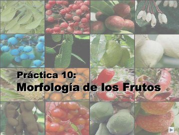 Morfología de los Frutos