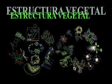 """Estructura vegetal - ies """"poeta claudio rodríguez"""""""