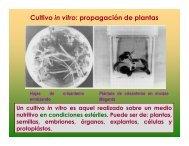 Cultivo in vitro: propagación de plantas