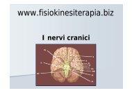 I nervi cranici - Fisiokinesiterapia.biz