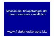 Degenerazione assonale walleriana - Fisiokinesiterapia.biz
