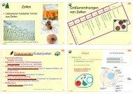 Biologie f. Pharmazeuten (2) - 24mb - PharmXplorer