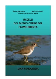 uccelli del medio corso del fiume brenta una fenologia i