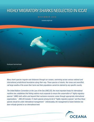 Highly Migratory Sharks Neglected in ICCAT - Oceana