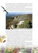 Progetto LIFE Natura Biarmicus Tutela degli habitat e dei rapaci del ... - Page 3