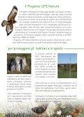 Progetto LIFE Natura Biarmicus Tutela degli habitat e dei rapaci del ... - Page 5