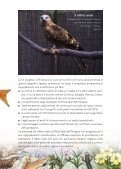 Progetto LIFE Natura Biarmicus Tutela degli habitat e dei rapaci del ... - Page 7