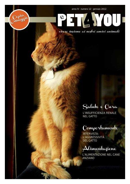 perché i gatti maschi ottengono infezioni del tratto urinario