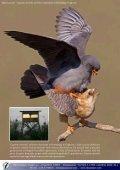 capanni fotografici, valorizzazione territoriale e ... - skua nature - Page 5