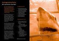 Sie fangen dicke Fische - WDW Consulting GmbH