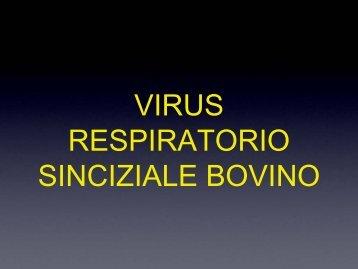 VIRUS RESPIRATORIO SINCIZIALE BOVINO