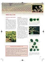 Complesso dell'arricciamento - Veneto Agricoltura