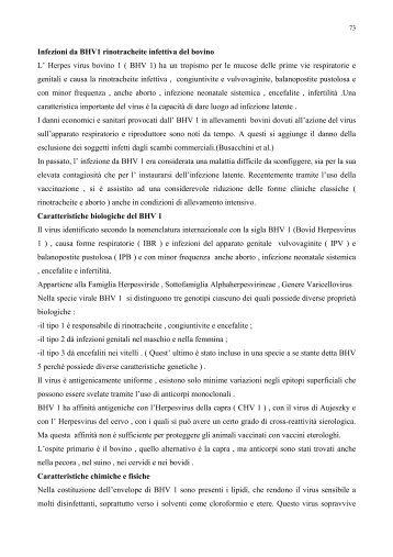 Infezioni da BHV1 rinotracheite infettiva del bovino L' Herpes virus ...