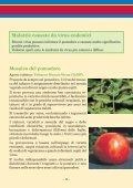 LE MALATTIE INFETTIVE DEL POMODORO - Ermes Agricoltura - Page 3