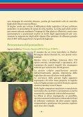 LE MALATTIE INFETTIVE DEL POMODORO - Ermes Agricoltura - Page 6
