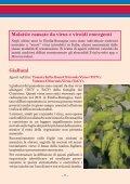 LE MALATTIE INFETTIVE DEL POMODORO - Ermes Agricoltura - Page 7