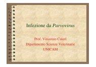 Infezione da Parvovirus - Cuteri.eu