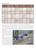 Download - Benelli - Page 4
