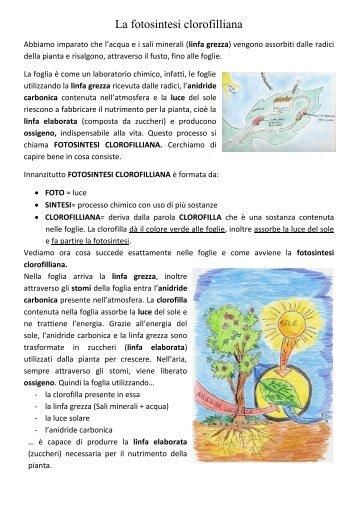 Fotosintesi Clorofilliana Pdf