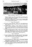 Lista sistemática de aves del partido de Berisso (Bs. As.). Parte I: no - Page 6