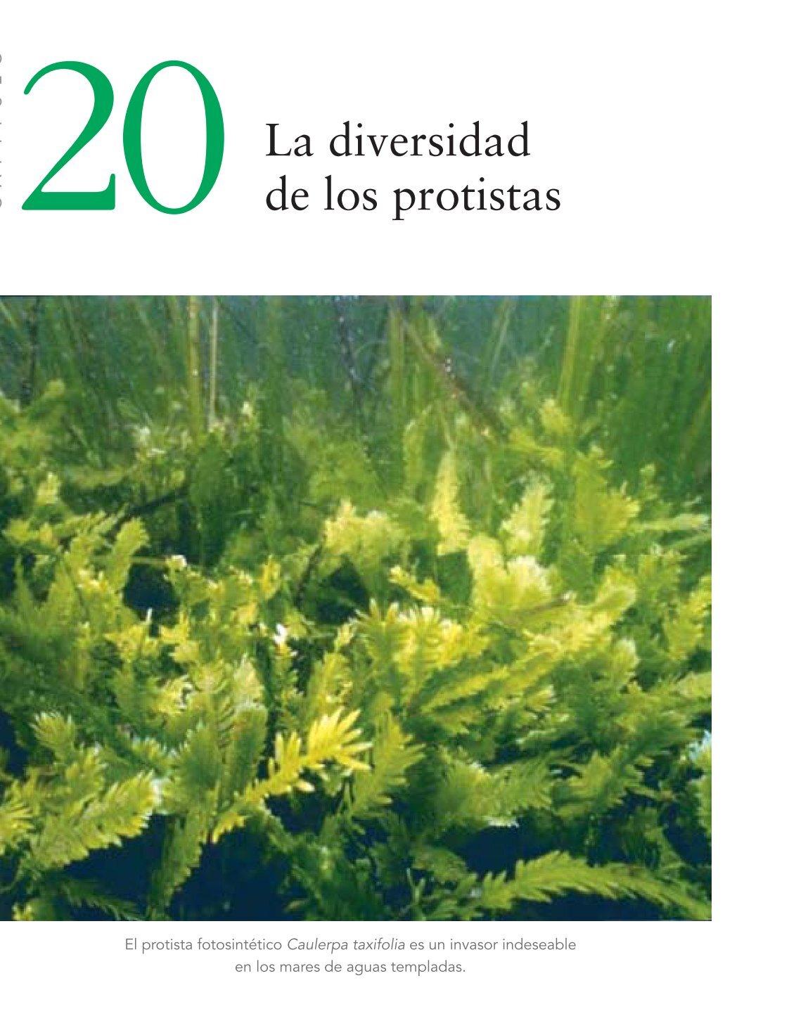 1 Free Magazines From Lavidaenlatierra Weebly Com