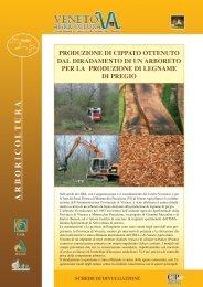 produzione di cippato ottenuto dal diradamento di un arboreto per la ...