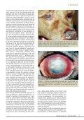Oculistica - Vet.Journal - Page 7