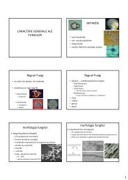 fungi-1 [Compatibility Mode] - Materiale studiu