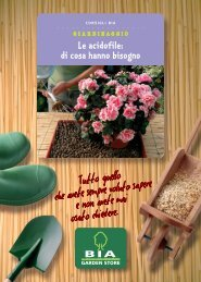 Le acidofile: di cosa hanno bisogno - Bia Garden Store S.r.l.