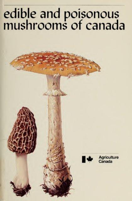 Pluteus umbrosus dry grain mycelium 10 g or 30 g