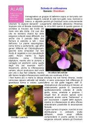 Scheda di coltivazione Genere: Oncidium