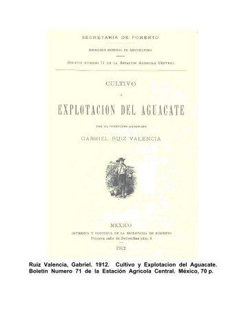 Explotación del Aguacate - Avocadosource.com