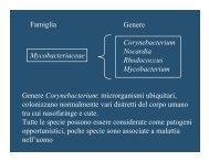 download pdf - Microbiologiatorvergata.It