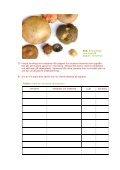 Svampar och svampsporer - Page 2