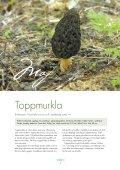 Läs PDF - Svenska nu - Page 7