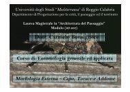 Lezione 2 - Morfologia Esterna - Laboratorio di Ecologia e ...