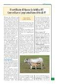 2009 - Associazione Nazionale Allevatori Bovini di razza piemontese - Page 3