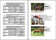 Katalog der Reitponyhengste mit Fotos / catalog of the riding ponies ...