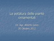 Corso del 30 ottobre 2012: Le piante or
