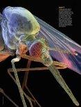 fai clic qui - Linx Magazine - Page 2