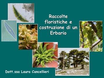 Costruzione dell'Herbarium