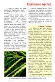 Castanea sativa - Piante spontanee in cucina - Page 2