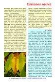 Castanea sativa - Piante spontanee in cucina - Page 3