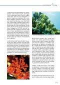 I coralli del Mediterraneo - Oceana - Page 6