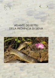 Atlante dei rettili della Provincia di Siena (dimensione: 5Mb)