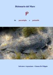 Dizionario del Mare - Vesuvioweb