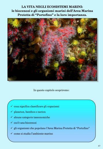 Biologia marina sezione 1 - Giocanatura