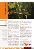 Opuscolo - Life Fauna di Montenero - Page 7